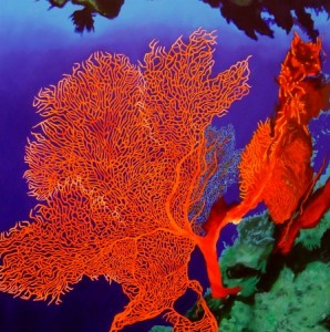 cd682 orange sea fan